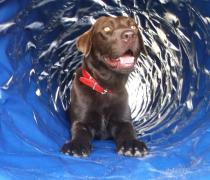 Z psem na wakacje - kolonia i obóz dla dzieci i młodzieży z własnymi psami, I stopnia (początkujący), Ryn